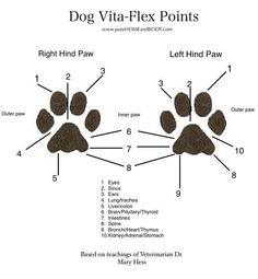 Use this Dog vita-flex point chart to know where to apply essential oils.  Click here for more info:  http://www.ylnaturalliving.com