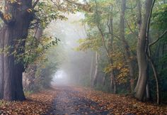 Autumn foggy narrow road