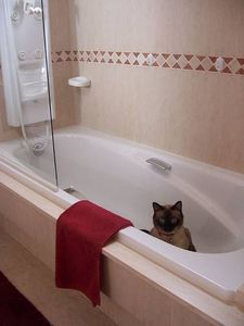 Home Remedies for Cleaning Rust Stains from a Bath Tub thumbnail