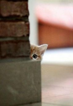 #kitten hiding behind a brick wall