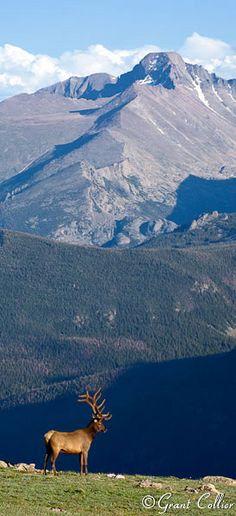 Elk, Longs Peak, Rocky Mountain National Park, Colorado - Flowers World State Of Colorado, Colorado Homes, Colorado Mountains, Rocky Mountains, Longs Peak Colorado, Estes Park Colorado, Colorado Springs, Rocky Mountain National Park, Alberta Canada