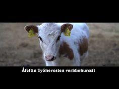 Blogi - hevoskoulutus.fi