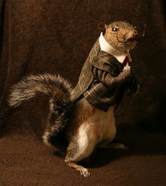 In art because it's taxidermy... LOVE!  SQUIRREL!