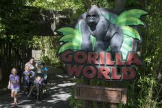 #After report, family of boy in gorilla pen thanks zoo again - New Jersey Herald: New Jersey Herald After report, family of boy in gorilla…