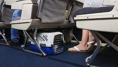 Tips for flying with dogs