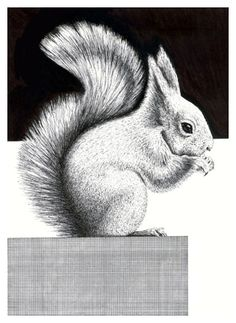 How to Draw a Squirrel with Pen and Ink http://www.artyfactory.com/drawing_animals/how_to_draw_a_squirrel/how_to_draw_a_squirrel.htm