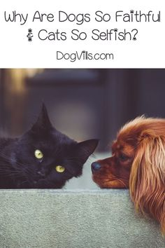 A friend asked me, �Why are dogs so faithful? Why are cats so selfish?� That sparked my curiosity, and I decided to do a little research into the topic. Find out what I learned!