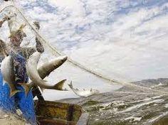 """JORNAL O RESUMO - GERAL - PESCA LIBERADA JORNAL O RESUMO: Vamos pescar? """"Ta tudo liberado"""". E agora só tem p..."""