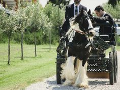 carriage # wedding destination bologna # irish cob # www.cabiancadellabbadessa.it