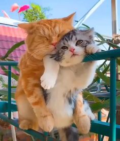 Cute Kitten Gif, Cute Kittens, Cat Gif, Cats And Kittens, Dog Anxiety, Beautiful Cat Breeds, Funny Cat Pictures, Baby Cats, Cute Baby Animals
