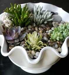 SucculentTerrarium- easy DIY