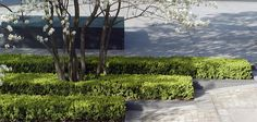 Townshend Landscape Architects - Projects - Tower Place