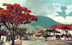 MIRANDA, Municipio Chacao. Urbanizacion El Rosal Caracas principio de los años 50s