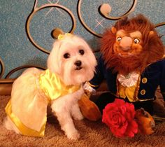 Dog Halloween Costume Contest: Belle - - Maybe Mya 2nd Birthday Costume :) LOL