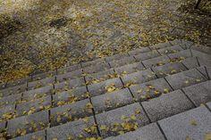 #00440762 冬止まり / Autumn of the end.
