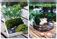 上有植物,下有金魚,相互和諧,相互受益,而且更能帶給你自然的親切感。