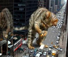 King Kong cat~ RAWR