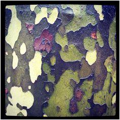 Sycamore tree on a rainy day, Philadelphia.