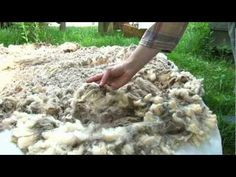 Land of Lanolin: 5 Ways to Learn About Sheep & Wool this Spring