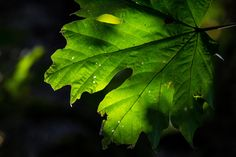 Week 17 - Last of Summer Green