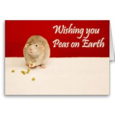 Peas on Earth Christmas Rat Cards http://www.zazzle.com/peace_on_earth_christmas_rat_cards-137296927044274932?type=notecard&view=113404083060829587&areas=%5bcard_4x56_outside_print_horz_front%5d&rf=238205274887202706