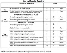 Manual Muscle Testing Grading Chart, adapted from the book by Florence P. Kendall called Muscles, Testing and Function #MMT #kinesiology