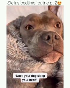 Cute Funny Dogs, Funny Dog Memes, Funny Dog Videos, Funny Animal Memes, Funny Animal Pictures, Cute Funny Animals, Cute Baby Animals, Animals And Pets, Country Babys