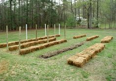 Straw bale gardening: I can have the effect of raised beds without spending a fortune! Starting this as soon as the farmers around here harvest their winter wheat.