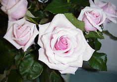 Peninsular Rose Club - Savoy Hotel
