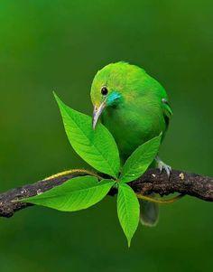 Most Beautiful Birds, Pretty Birds, Amazing Animals, Animals Beautiful, Exotic Birds, Colorful Birds, Bird Pictures, Animal Pictures, Palette Verte