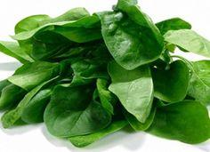 Полезные свойства растения шпинат