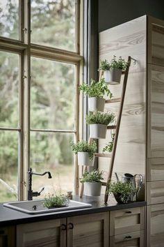 Kruiden in de keuken, aan een kleine ladder bevestigd.