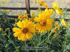 Yellow Wildflower #theflowershopfairoaks