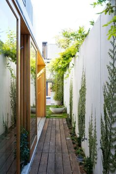 Planting For Side Yards With Narrow Timber Deck And Concrete Wall Climbing Plants Also Hardwood Frame Sliding Glass Door And Vines On Wall Design Ideas: Modern Minimalist Interiors, Bondi House by Fearns Studio Landscape Design, Garden Design, House Design, Path Design, Terraced House, Seiten Yards, Outdoor Spaces, Outdoor Living, Narrow Garden