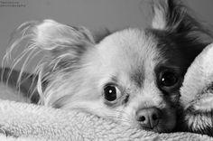 #dog#eye#love...
