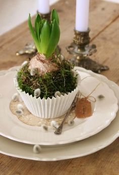 Beautiful Easter decorations on the table - 21 creative ideas in sunny .- Schöne Osterdeko auf dem Tisch – 21 kreative Ideen in sonnigen Farben Easter decoration on the table -hyacinth-muffin-shaped-moss-willow kitten - Deco Floral, Arte Floral, Floral Cake, Spring Bulbs, Bulb Flowers, Easter Table, Easter Eggs, Deco Table, Easter Crafts