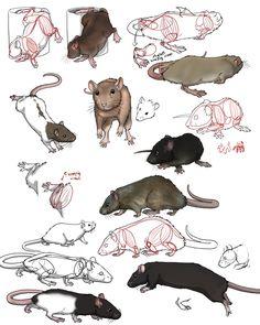 practise on rats by SweGizmo on DeviantArt