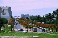 final da Avenida 24 de Julho em Lourenço Marques, na direcção poente, pouco antes da Independência, perto da altura do Natal.