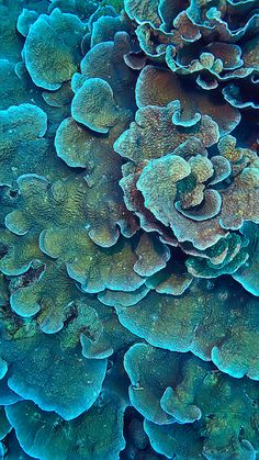 Underwater Painting, Underwater Life, Coral Wallpaper, Wallpaper Backgrounds, Coral Blue, Coral Color, Instagram Story Template, Instagram Templates, Ocean Creatures