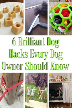 6 Brilliant Dog Hacks Every Dog Owner Should Know