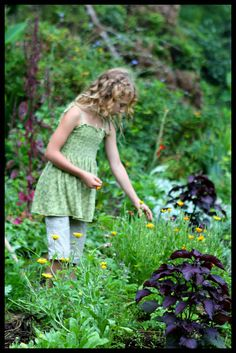 Herbal polyculture- shiso, calendula, holy basil, hibiscus, passionflower and comfrey. Article on the top ten medicinal herbs for the garden.