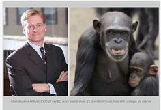 Call Christopher Hillyer, the President & CEO of the NY Blood Center, and demand that his organization fulfills its obligation and promise to provide lifelong care to the 66 chimpanzees used in their medical experiments and abandoned in Liberia: (212) 570-3000.