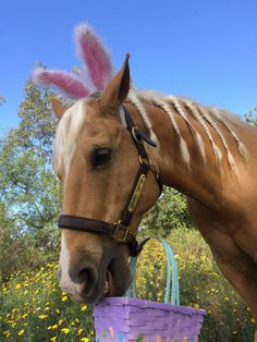 Easter Pony!