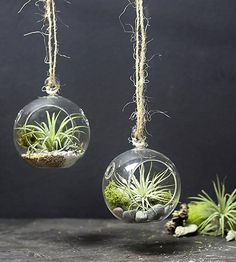 DIY Mini Hanging Air Plant Terrariums, Set of 2 by MakersKit on Scoutmob Shoppe