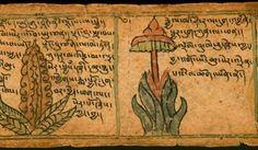 tibetan medicinal manuscript