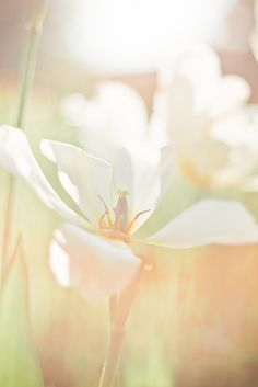 touched with an ethereal quality of light and radiance Illumination © Krista Palmu