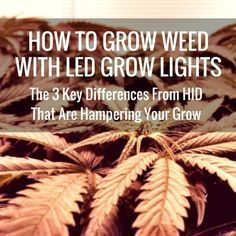 How To Grow Weed With LED Grow Lights - The 3 Key Differences From HID That Are Hampering Your Grow---If you've ever wondered why you cant get the results LED manufacturers promise, this might be why.