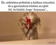 New Funny Animals Memes Humor Mom Ideas Funny Animal Memes, Cat Memes, Funny Animals, Animal Humour, Animal Funnies, Haha Funny, Lol, Funny Stuff, Funny Humor