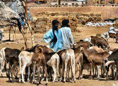 Tamanrasset sheepmarket