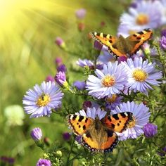 Its official, I'm building a butterly garden. Going to Home Depot tomorrow :)